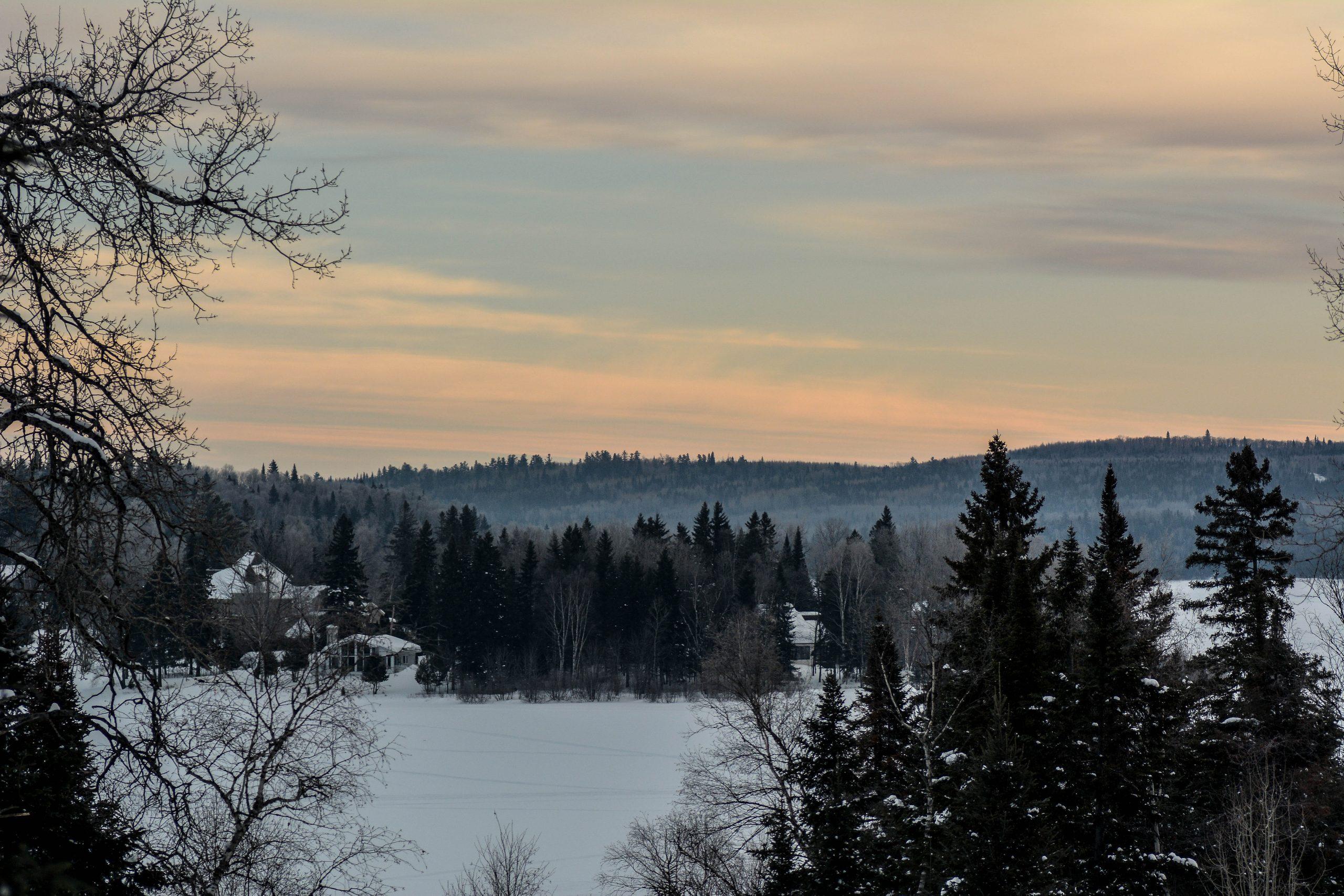 Arbres et montagnes dans un paysage hivernal